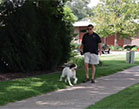 Man Walking Dog in Park